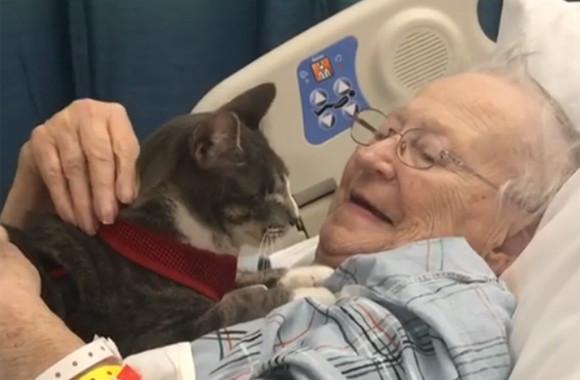 癒しの力を持つと評判の盲目の猫。おばあさんのお見舞いに連れて行ったところ、病気が快復するという奇跡(アメリカ)
