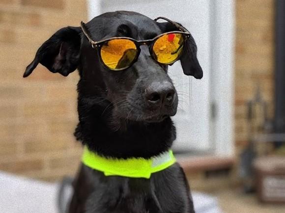 """あの犬と仲良くなりたい!動物好きの男性4人が飼い主に手紙で""""お友達申請""""、返信キター!(イギリス)"""