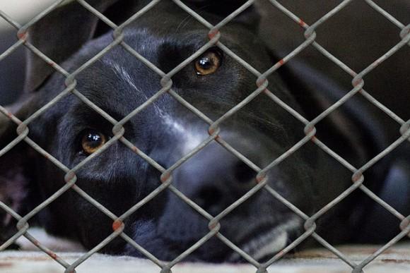 アメリカのデラウェア州、動物保護施設内での犬猫の殺処分が全国で最も少ない州に