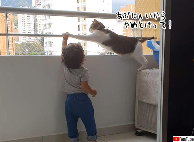 猫がベランダから子供を守る