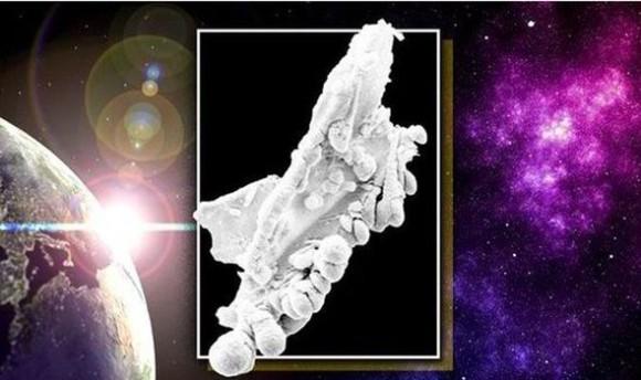 思ってたのとちょっと違うけど・・・地球外生命体をとらえた写真が公開される(英研究)