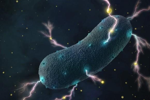 なんと!発電する腸内細菌が発見され、発電に使用される遺伝子が特定される(米研究)