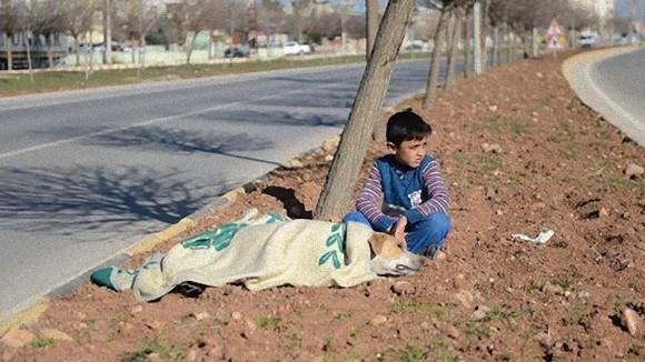 シリア難民の少年、かけがえのない自分の毛布を車にひかれて横たわる犬にかけ、救助を待ち続ける(トルコ)