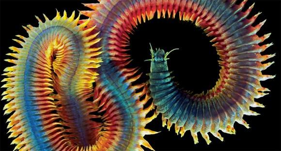 ハイパー・ゴージャス&ラグジュアリー。見事な造形美を見せる知られざる生き物の世界(閲覧注意)