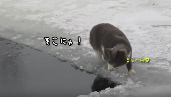 こいつ、できる・・・一撃必殺魚捕り猫