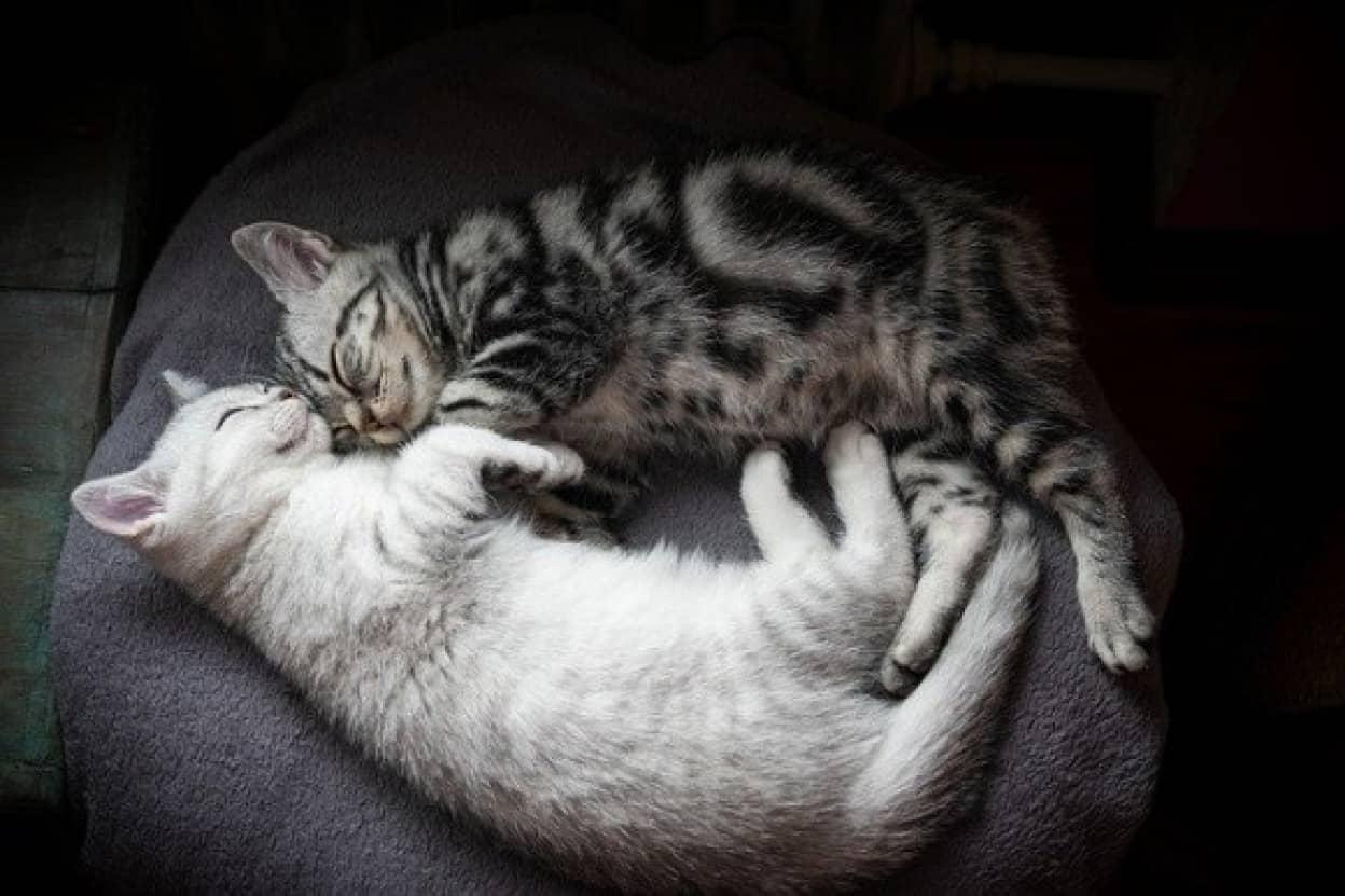 猫の柄の見分け方