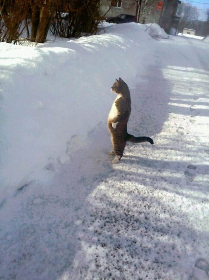 standing-cats20_e