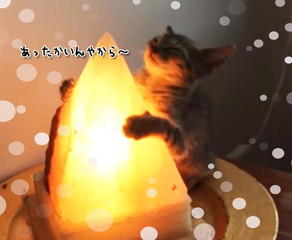 ピラミッドパワーを注入し、別の意味で人類を滅亡させる気満々の子猫