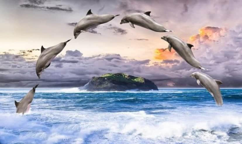 dolphin-1548405_640_e