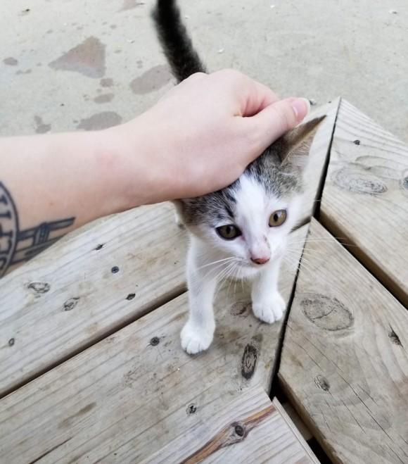 子猫 餌 時間