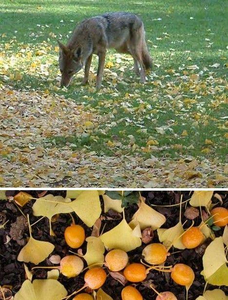 amazing_fruits_12x