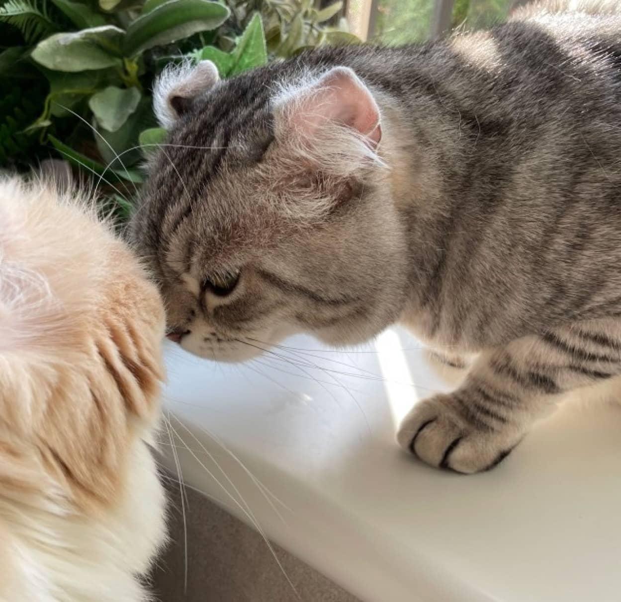 猫のヒゲのセンサー機能が解明される