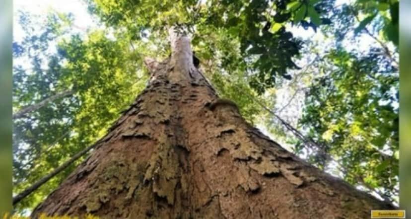 tree4_e