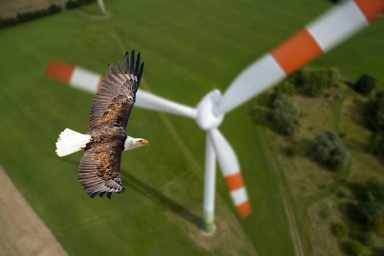スマートカメラが鳥の衝突事故を大幅に減らす