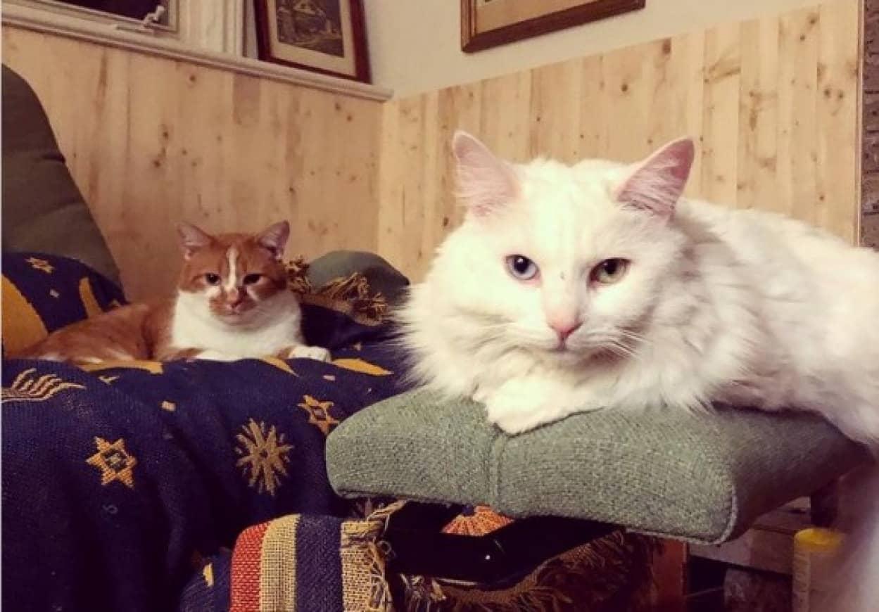 猫・飼い主・猫の三角関係ラブストーリー