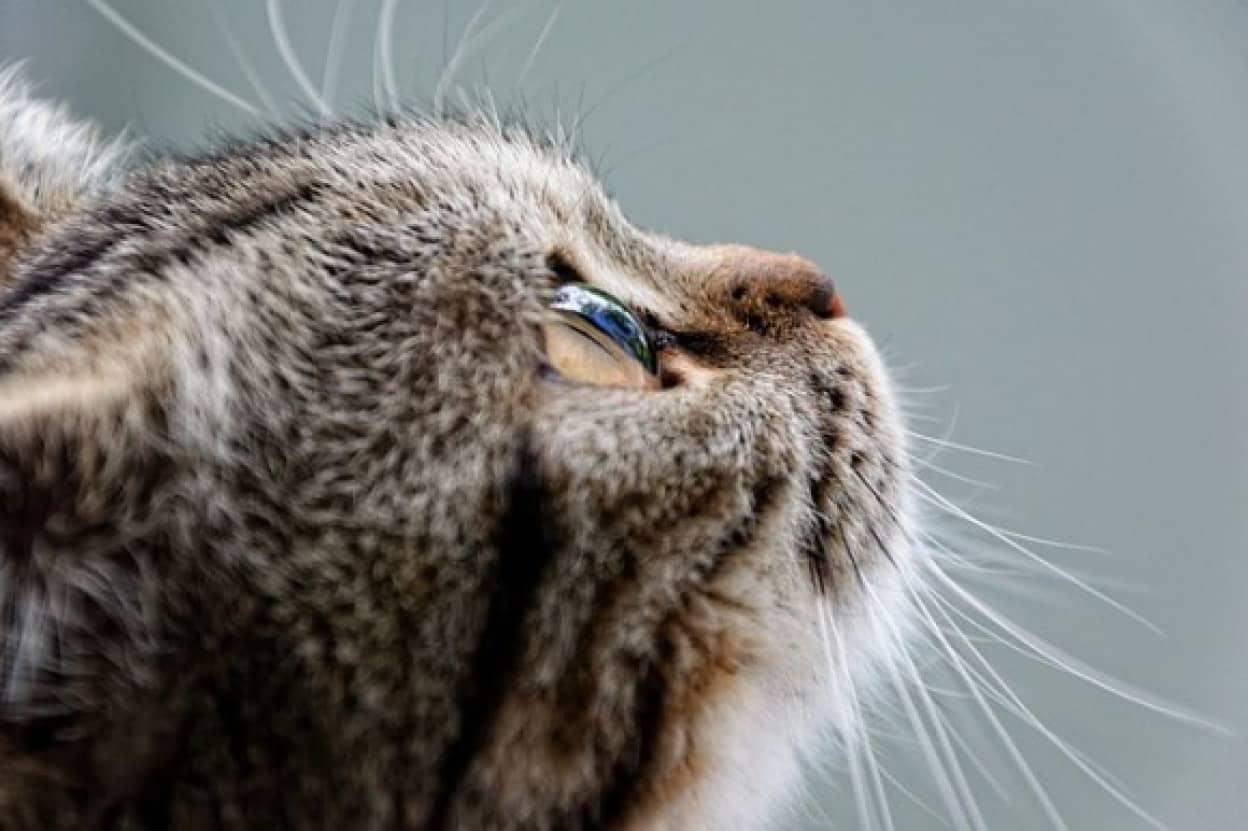 cat-2435021_640_e