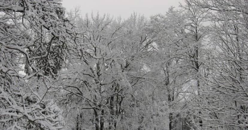 winter-75482_640(1)_e