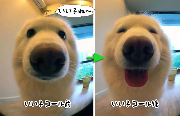 犬と鳥はうれしそう!では猫は?ペットに「いい子だね!」と声をかけた後の表情の変化がわかるビフォア・アフター