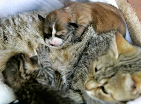 animal_adoptions_07