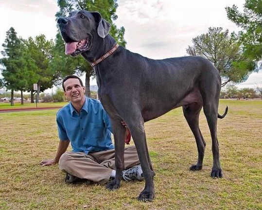 Worlds_Tallest_Dog_09