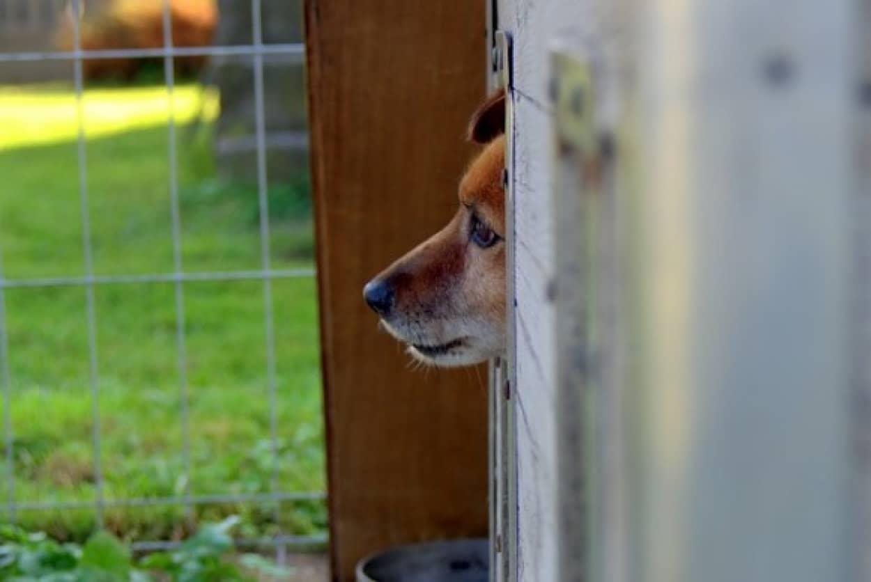 オーストラリアで動物虐待の罪が重くなる法案が可決