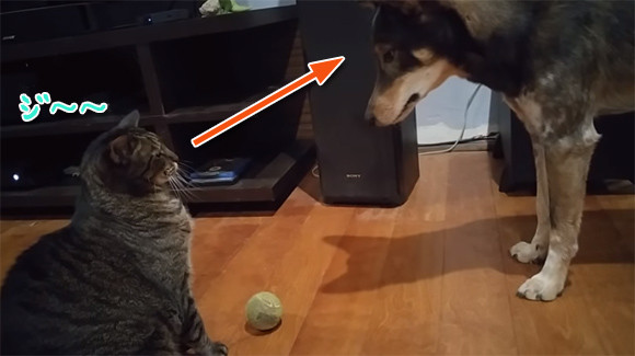 猫と飼い主の板挟みで苦悩する犬のいる風景