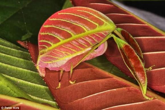 ハリーポッターの帽子のようなクモから生殖器4本のヤスデまで、2017年度に発見された新種トップ10(※虫出演中)