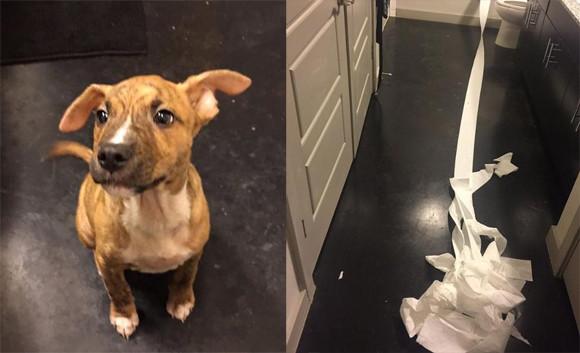 トイレをなかなか覚えられない子犬がとった行動が涙ぐましくて飼い主撃沈(アメリカ)