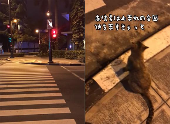赤信号は止まれだにゃ。信号待ちをし、歩行者を促しながら青になったら渡る猫
