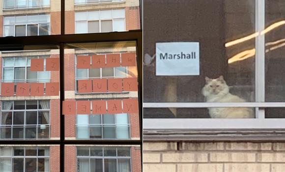 向かい側のビルの窓際にいるかわいい猫。ポストイットを使ってコンタクトを取ってみた。返事がキターッ!(カナダ)