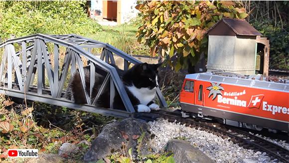 退かぬ!媚びぬ!省みぬ!ポリシーの猫が鉄道模型のレールに鎮座。そこに列車がやってきた!さあ、どうする?