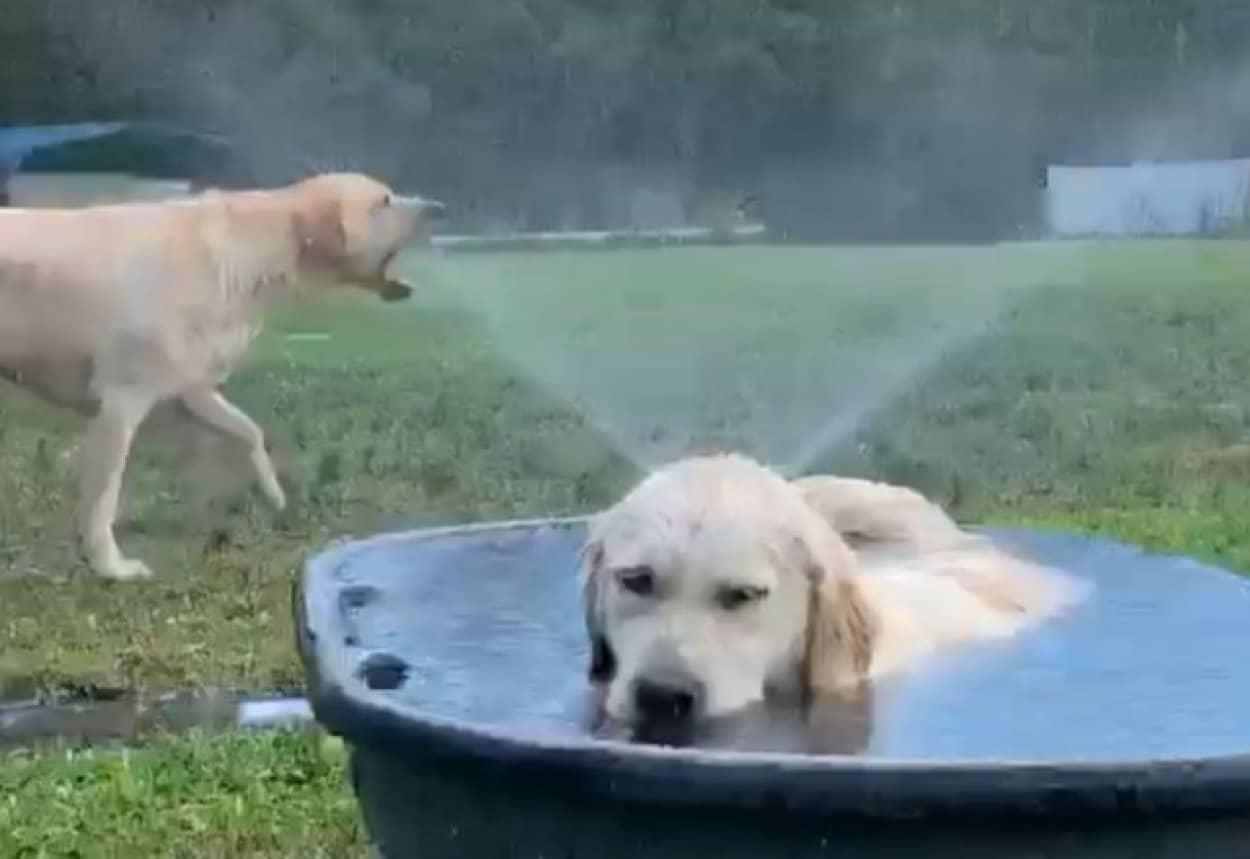 """この世には2種類の犬がいる"""""""