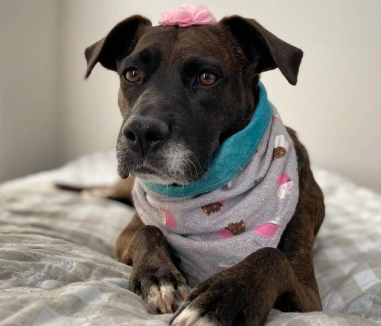 ネグレクト状態にあった犬がやさしい飼い主に巡り合い、おもちゃやベッドの存在を知る