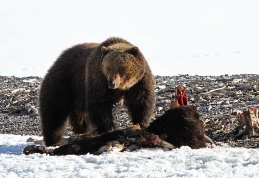 bear_e