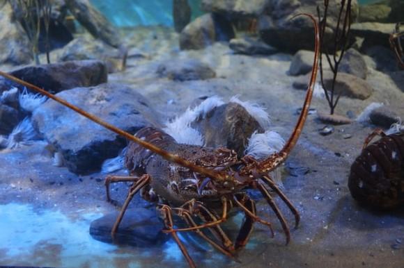 lobster-483279_640_e