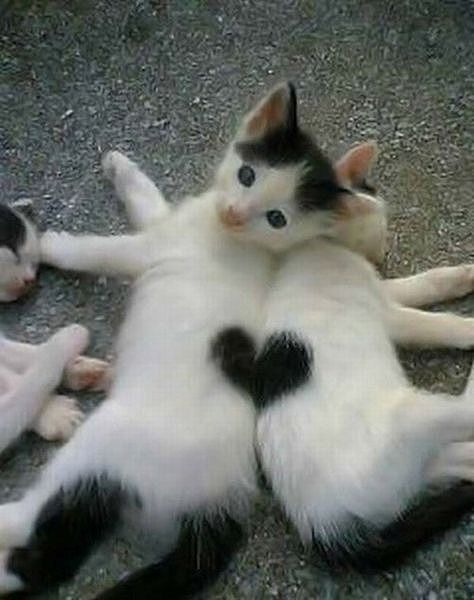 cats_with_fur_hearts_01