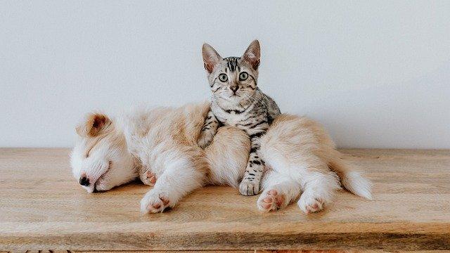 犬と猫を仲良くさせる方法があった