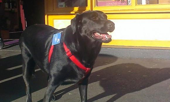 ひとり上手がさらに加速。ひとりでちょんとバスに乗って、公園に遊びに行く犬(アメリカ)