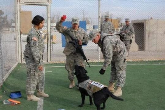 dogs_in_army_08