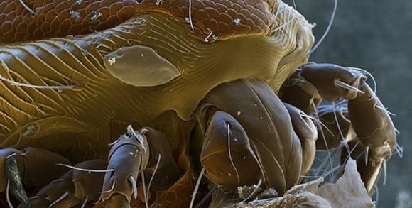 こんなに凄い形をしてるのに地球外生物でないわけがない。異形を放つ12の生物の拡大写真