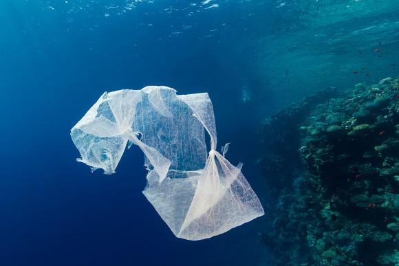 海に投棄されたビニール袋が驚くほど少ない理由。微生物が進化を遂げ分解するようになった可能性(スペイン研究)