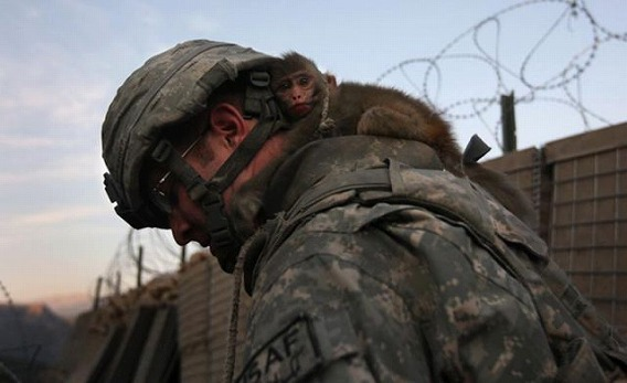 military_humor_part_2_640_15