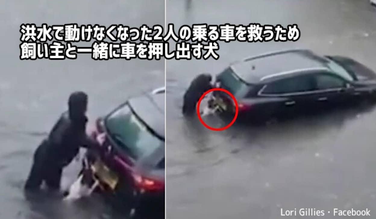 困っている人を助けるため飼い主と共に車を押す犬no title