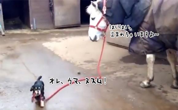 自分の体の何十倍もあるモノを盗み出そうとした犬。そして作戦成功!
