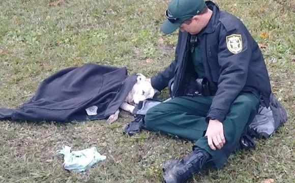車にひかれてしまった犬の隣に座り、救急部隊がくるまで言葉をかけながら励まし続けていた警官の姿(アメリカ)