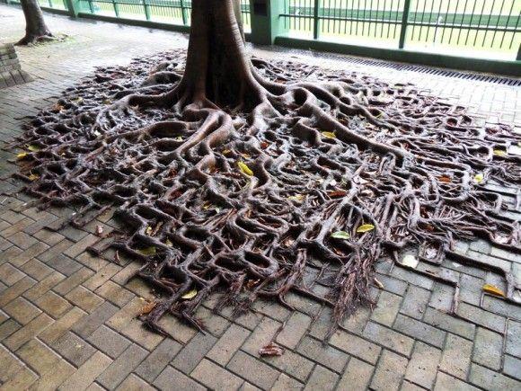 おどろ木の生命力。最悪の状況にあっても生きることをあきらめず太陽に向かってその枝を伸ばす10本の樹木