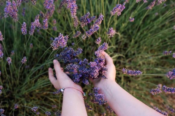 ニンゲン、触るな!植物は触られるのを超嫌う。驚くべき防衛反応が明らかに(オーストラリア研究)