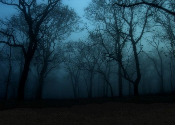 fog_19
