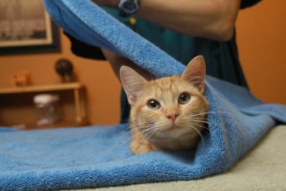 猫と和解せよ。猫をおとなしくさせる為のタオルで簀巻きに ...