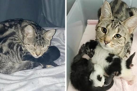 難産を乗り越えて我が子のみならず他の子にも愛情を示す母猫